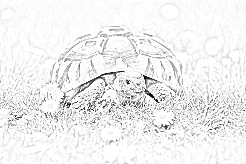 Tartarughe disegni per bambini da stampare for Letargo tartarughe acquatiche