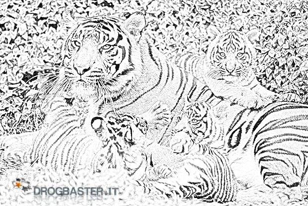 Tigre disegni per bambini da colorare for Disegni di tigri da colorare