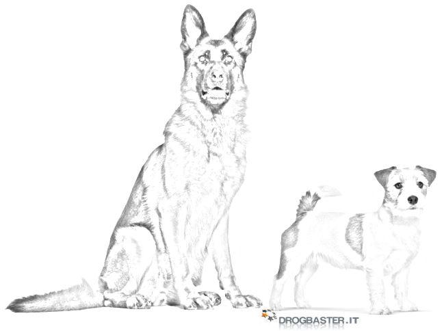 Cani disegni da stampare e colorare for Disegni di cani da stampare e colorare