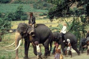 Elephant ride 300x199 Happiness Part 2: Where Does Happiness Live?