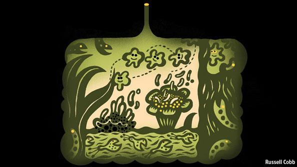 bacteria micro 2