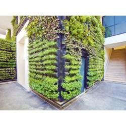 Small Crop Of Vertical Gardens Walls