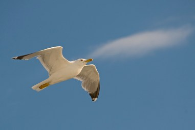 kao ptica