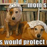 funny-dog-pictures-mom-said-this-would-protect-us