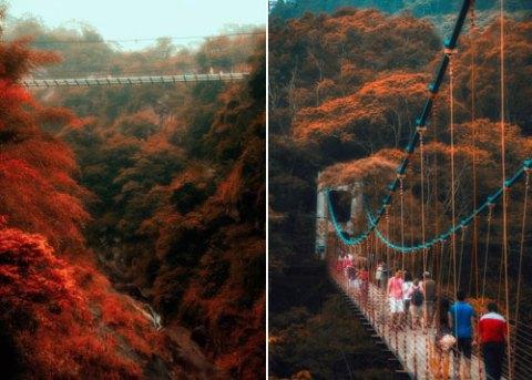 Đài Loan khai trương cầu kính để ngắm mùa thu