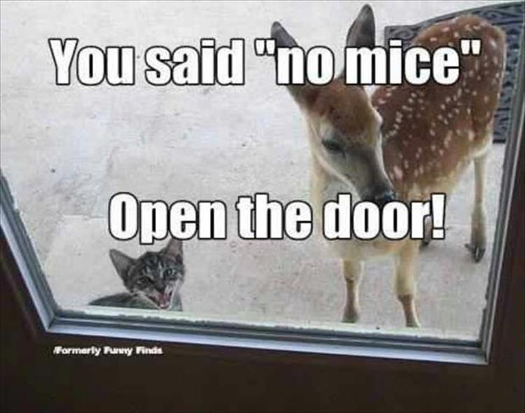 funny animals (19)