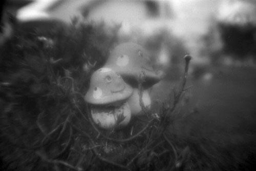 Experimente o foco suave como (d)efeito especial desse adaptador fisheye