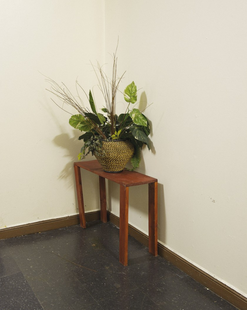Plant03