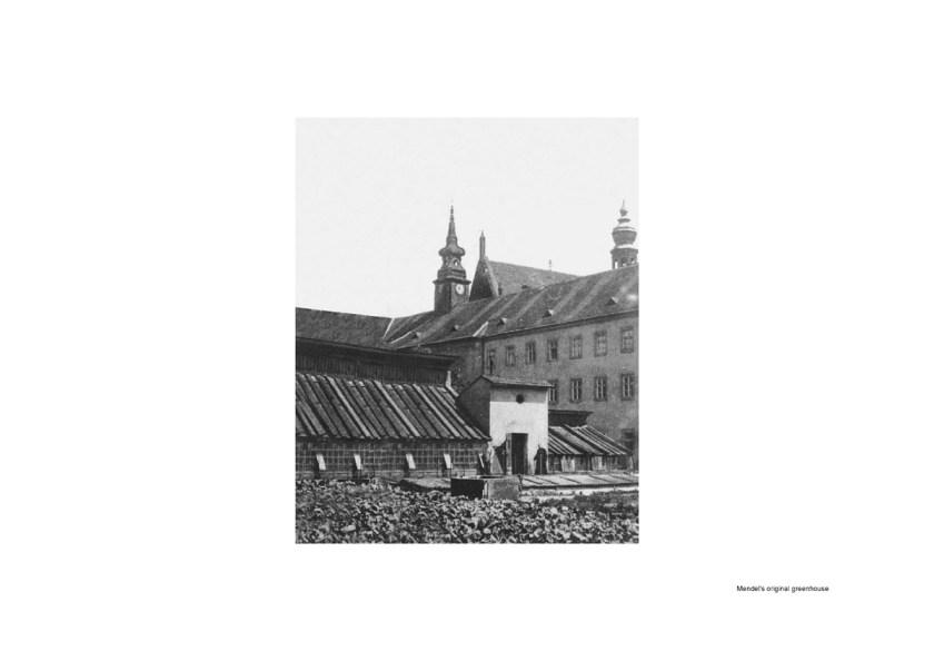 Mendel-greenhouse-drawings-Chybik-Kristof_01