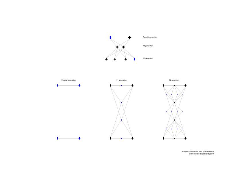 Mendel-greenhouse-drawings-Chybik-Kristof_06