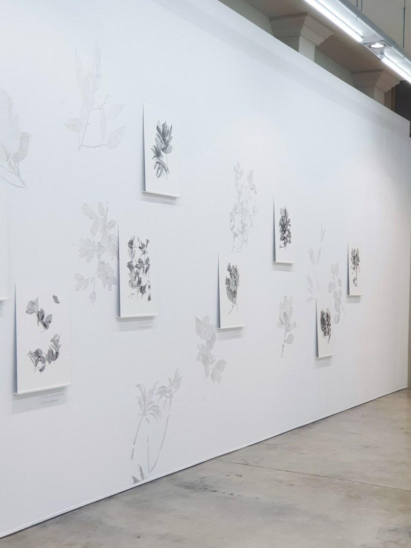 gabinete-de-dibujos-ernesto-casero-las-plantas-perdidas-06