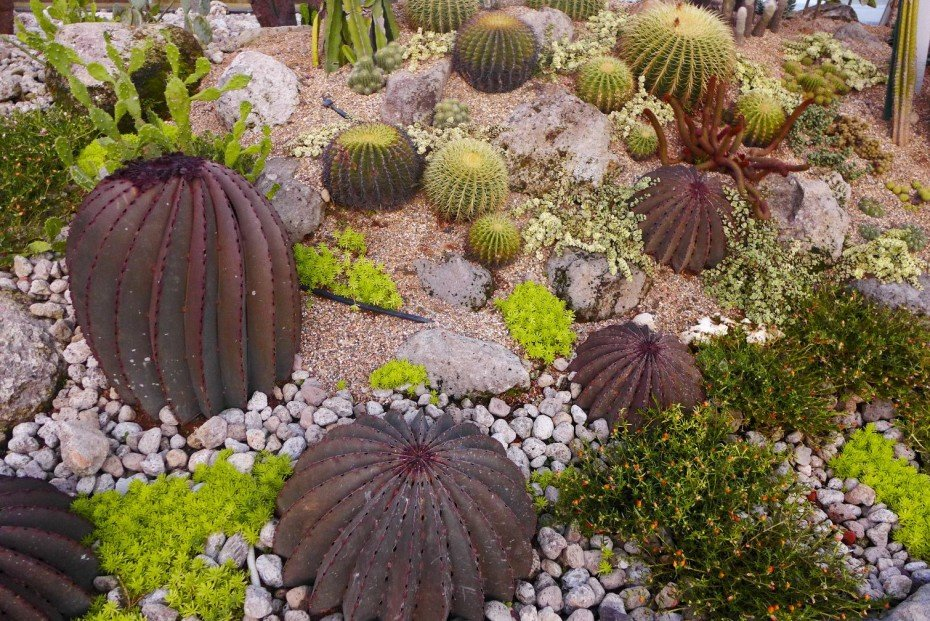 What to do in Singapore; Changi Airport Layover; Singapore Changi Airport Terminal 1; Cactus Garden