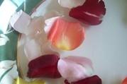 rose petals floating in water