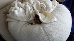 puppy snuggling on beanbag under blanket