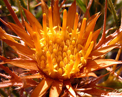 closeup of golden flower