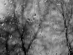 raindrops on window with tree showing outside