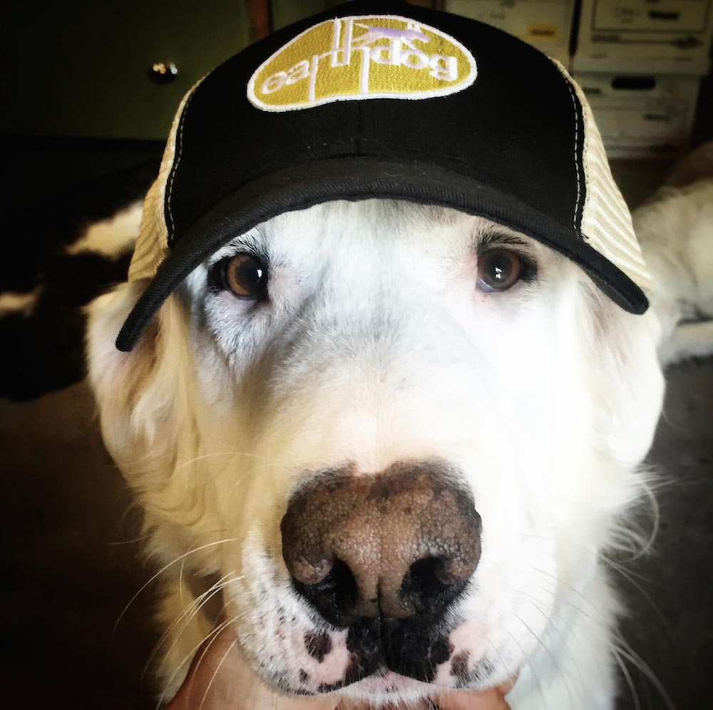Marvellous Earthdog Crew Member Benny Sporting Our Eco Friendly Trucker Hat Organic Trucker Hat Embroidered Eco Hats Earthdog Dogs Cowboy Hats Santa Hats Dogs bark post Dogs In Hats