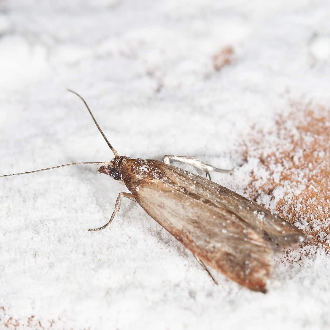 How to Get Rid of Moth Worms