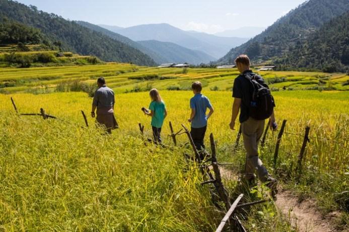 Walking through rice fields