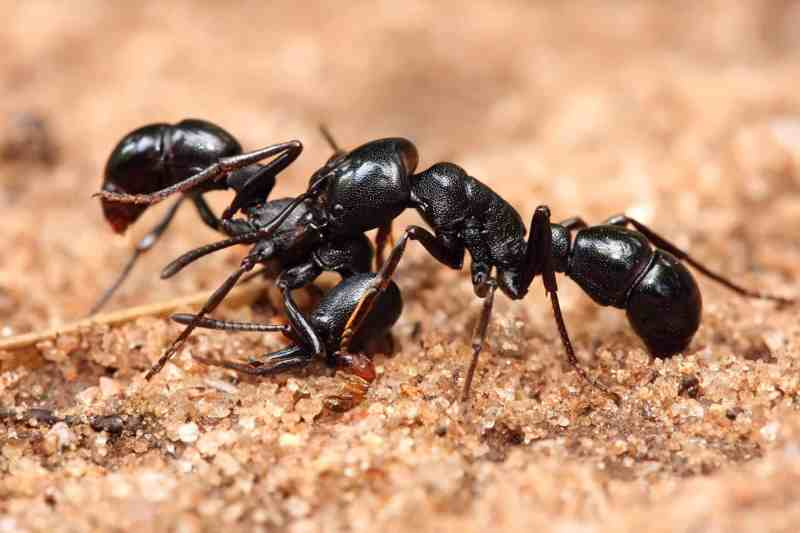 Large Of Diatomaceous Earth Ants