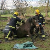 Firefighters rescue stranded horse at Brambridge