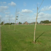 Replacement Trees for Dowds Farm Park