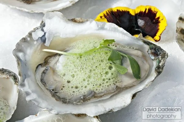 Matunuck oysters on the half shell, cucumber mignonette