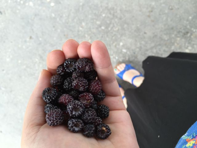 Berries with Danskos