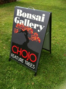 Chojo Bonsai Gallery Sassafras