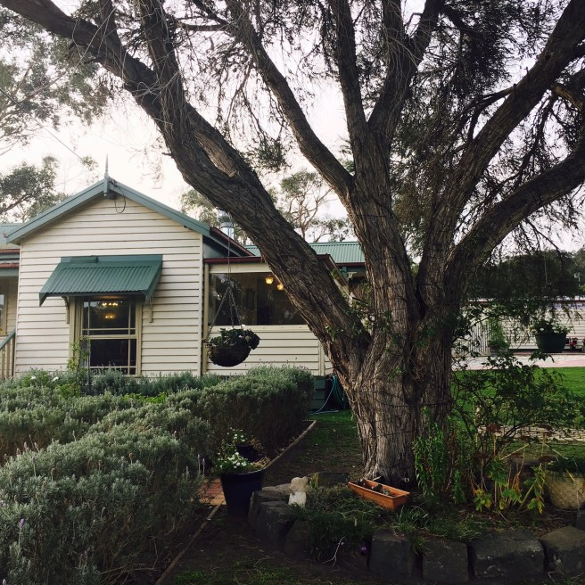 Lady Lavender's Tea Room Bunyip
