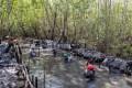 ricoh-restauracion-de-manglares