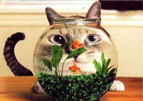 fish-bowl3