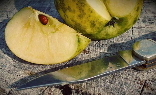golden-delicious-slice-west-virginia-organic