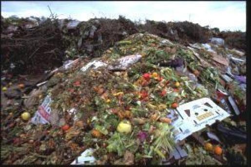 desperdício de alimentos