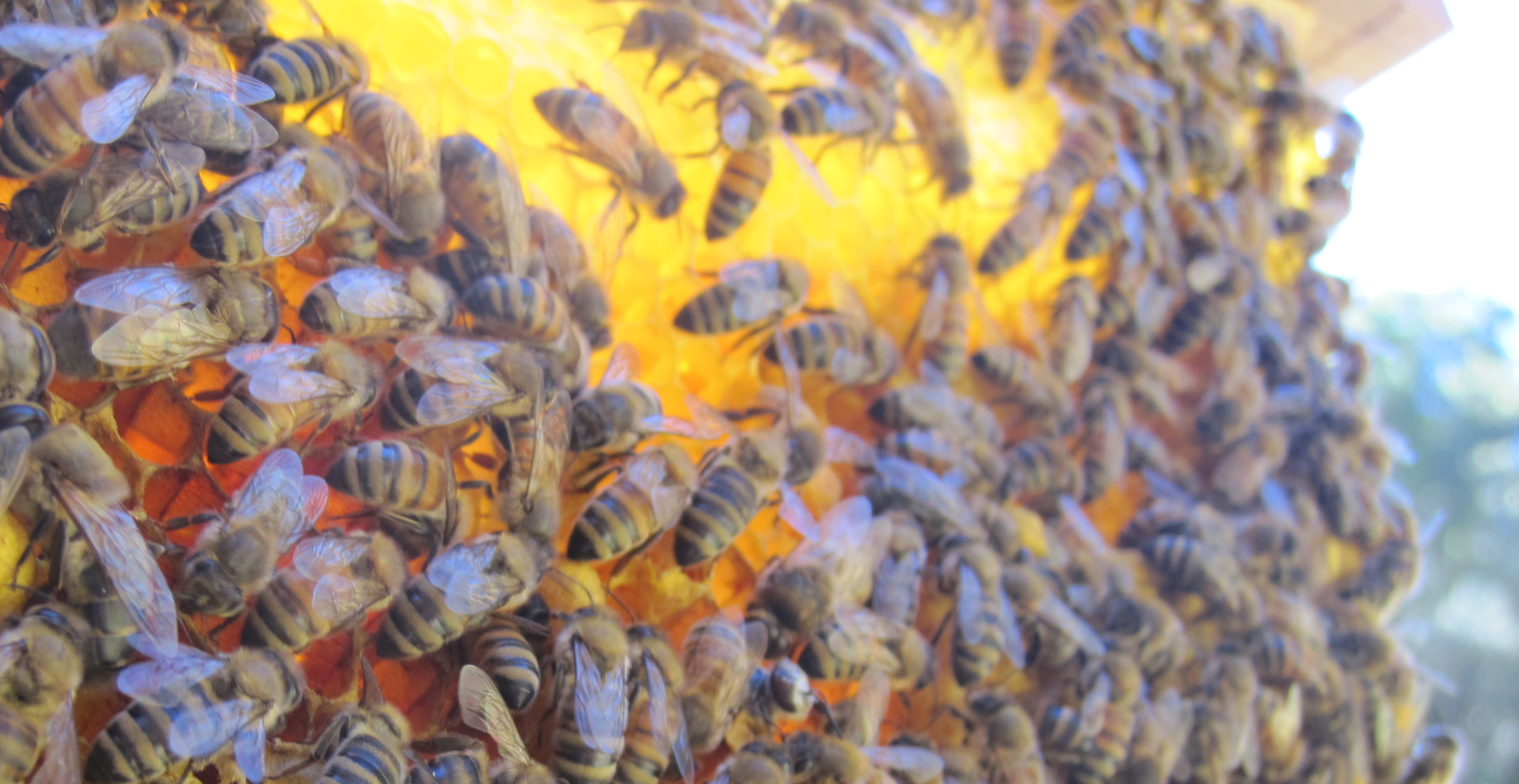 An Ode to Honeybees–a fiber artist's best friends.