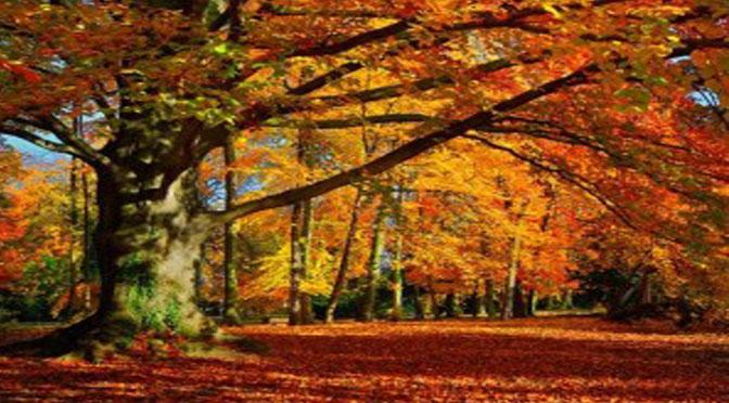 St Exupéry : La terre à travers l'arbre se marie au miel du soleil