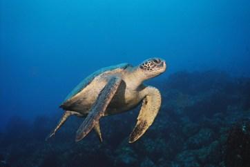 049 Galapagos