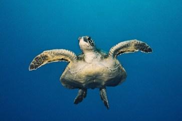 087 Galapagos