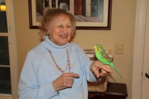 Great grandmother Mimi at 96 years old on Thanksgiving, enjoying her great grandaughter and namesake's baby light green English Budgie male named RJ. © COPYRIGHT 2016 Eddie's Aviary