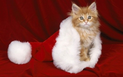 Christmas-Kitty-christmas-16124091-1280-800.jpg