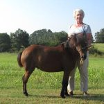 Martha MacDonald with her miniature horse, Cara who is recovering from being attacked.