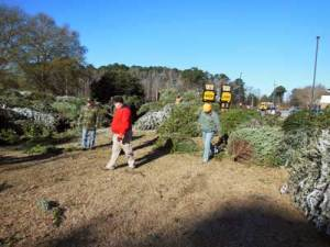 Corps collects 1,500 Christmas trees to become fish attractors at Thurmond Lake