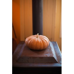 Small Crop Of Long Island Cheese Pumpkin