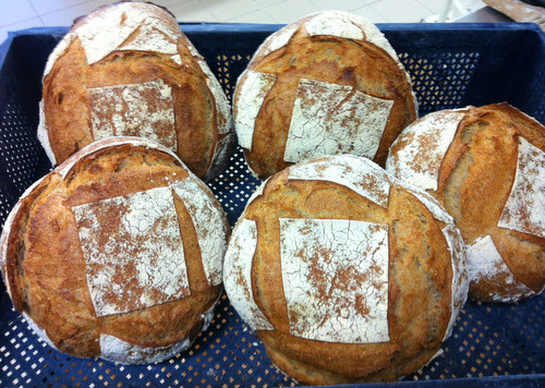Vermont Sour Dough loaves made with sourdough starter brought from home. How wonderful to have the taste of real bread!
