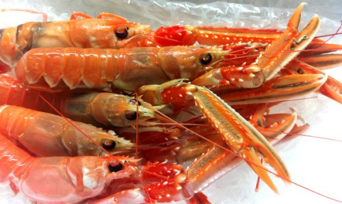 Fresh langoustine from the Hebridean Food Company