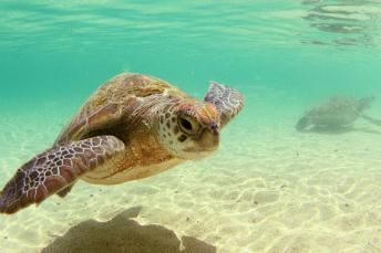 voyage de noces aux seychelles snorkeling