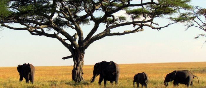 Africa and elephants