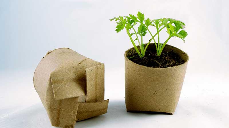 plantar-semillas-esto-si-son-deberes-de-verano-educadiver