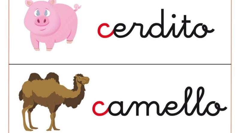 fichas de vocabulario para trabajar letras que comienza por c, como cepillo, cerdito, camello y cabina.
