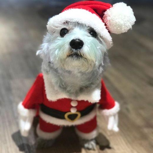 God jul önskar Lena, Josefin & Penny! Nu går vi på julledighet och Lena är åter på salongen den 9/1 och Josefin den 12/1!